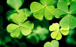 An Insider's Guide to St. Patrick's Day in Savannah