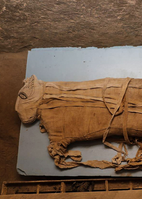 A lion mummy.