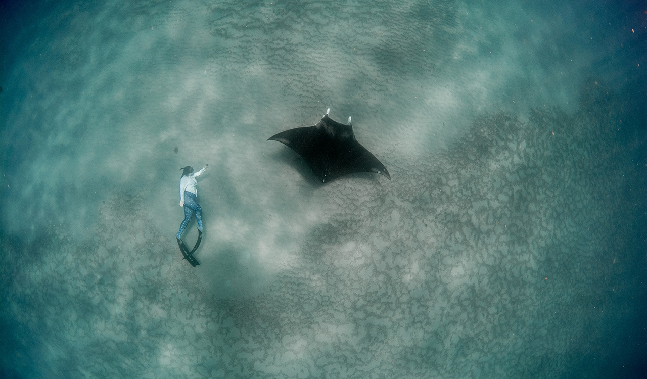 Researcher Christina Coppenrath takes photographs as she freedives alongside a young manta ray in South Florida.