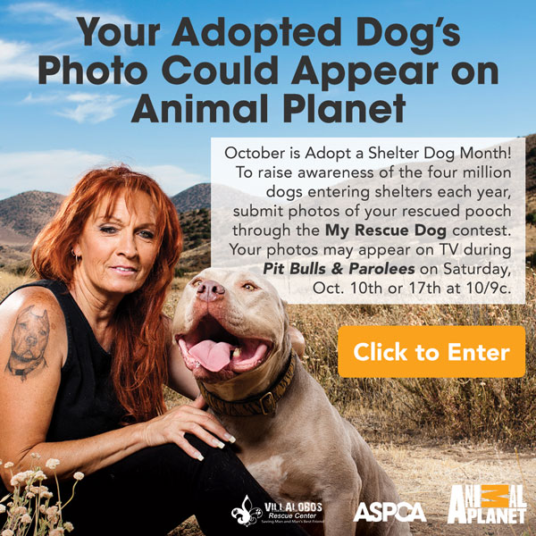 Your Adopted Dog's Photo Could Appear on Animal Planet. October is Adopt a Shelter Dog Month! To raise awareness of the four million dogs entering shelters each year, submit photos of your rescued pooch through the My Rescue Dog contest. Your photos may appear on TV during Pit Bulls & Parolees on Saturday, Oct. 10th or 17th at 10/9c. Click to Enter.
