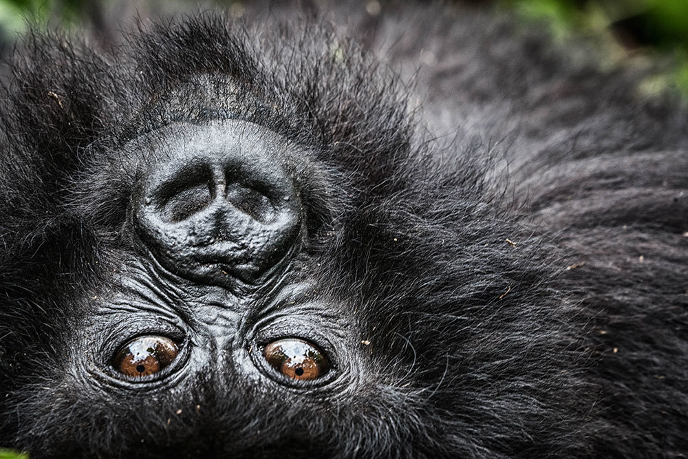 A close-up gorilla encounter that warmed this photographer's heart